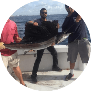 Catch Sailfish with YB Normal Sports Fishing