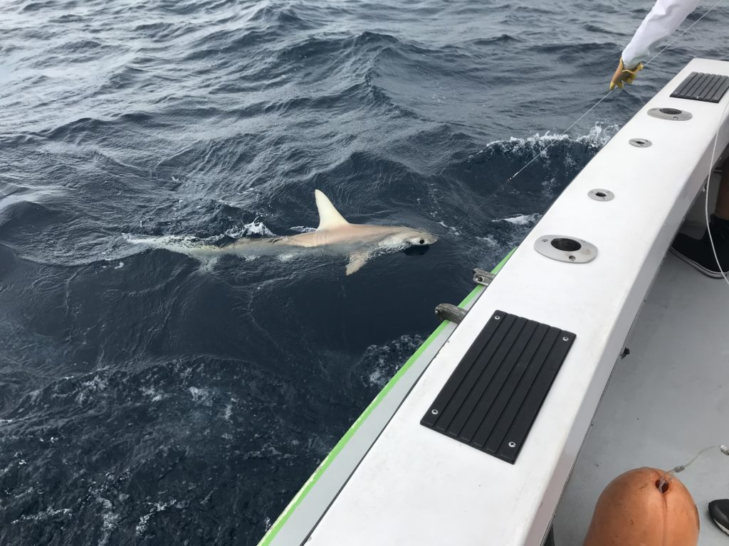shark fishing in Ft Lauderdale